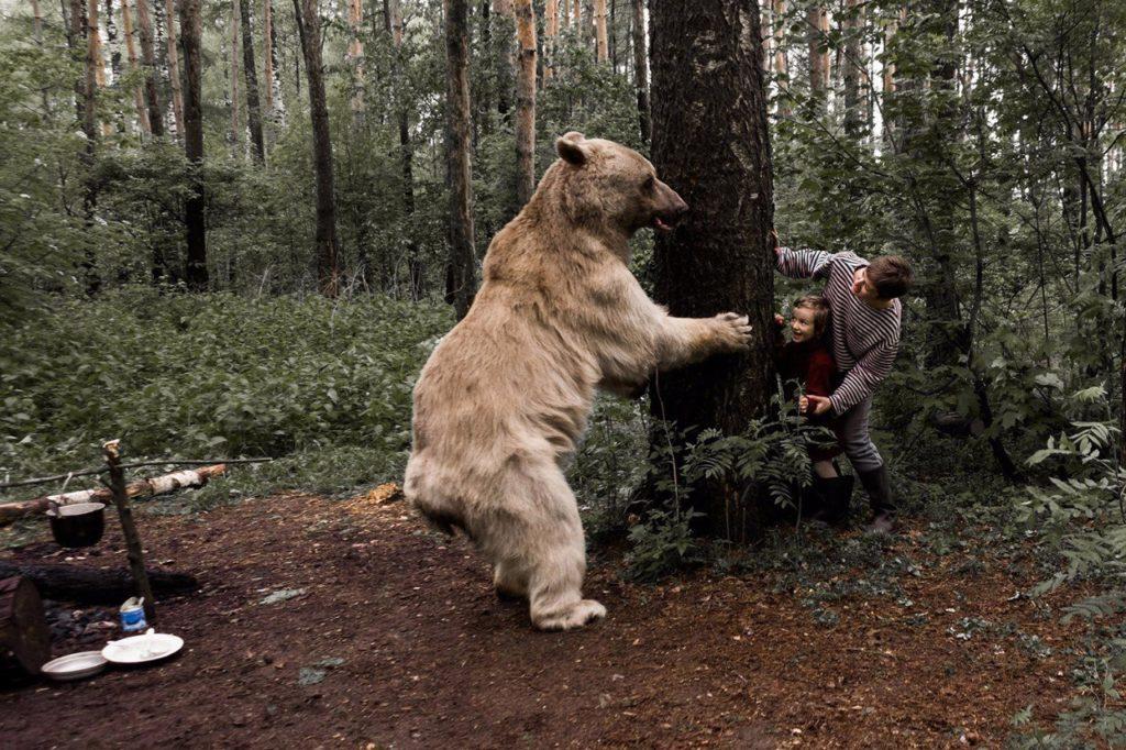 К чему снится убегать от медведя