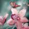 К чему снятся орхидеи? Что означает чистейшая красота?