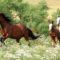 К чему снится конь – значение сна конь по соннику