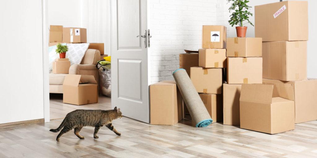 Как заходить в новую квартиру приметы