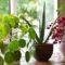 Народные приметы про растения – значение, варианты толкований