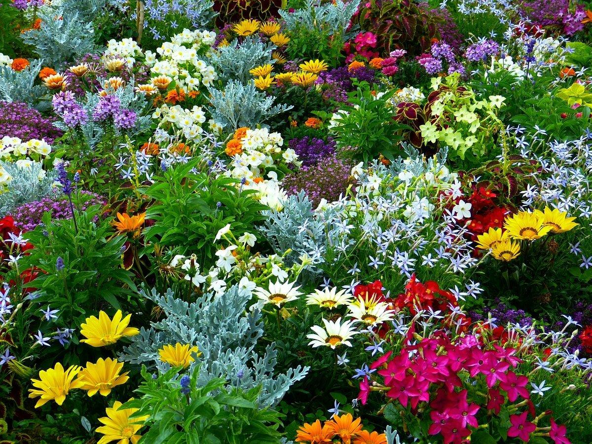 цветы живые на клумбе